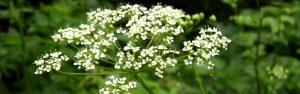 Kwiaty w Beskidach