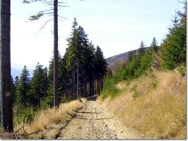 Zielony szlak z Klimczoka do Szczyrku